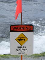 Shark Sighted Warning Sign.