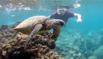 My Friend and a Green Sea Turtle at Sharks Cove Hawaii