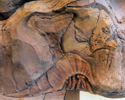 Hidden Rock Art: Reef Fish & Hermit Crab at Disney Aulani Resort