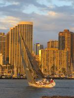 Honolulu Sailboat