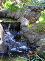A Small Waterfall Diverts Part of Manoa Stream into the Japanese Garden