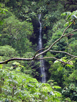 Manoa Falls in Honolulu