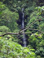 Manoa Falls in Honolulu
