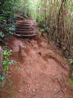 Waahila Ridge Trail Mud and Guavas