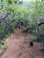 Waahila Ridge Trail Steepness
