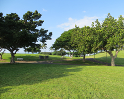 Paths through Kakaako Waterfront Park