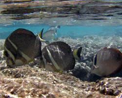 Fish on the Reef at Hanauma Bay Hawaii
