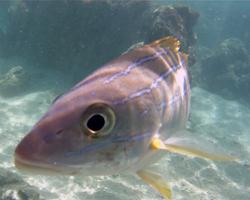 Fish-Eye View of a Fish Eye at Hanauma Bay Hawaii