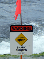 Shark Warning, North Shore Oahu