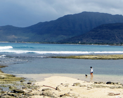 Walking the Dog on West Shore Oahu Beach near Maili Point
