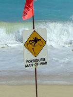 Portuguese Man-of-War Warning Sign on East Shore Oahu