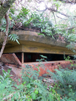 Overgrown 1st Bunker at Puu Maelieli Trail