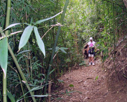 Friendship Garden Trail in Kaneohe, HI