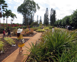 Self Guided Tour at Dole Pineapple Plantation
