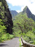 Old Pali Road at Below Pali Lookout