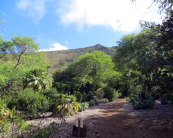 Unpaved Trails at Koko Crater Botanical Garden