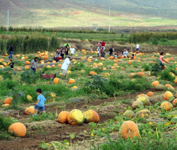 Finding Future Jack-O-Lanterns at Aloun Farms Pumpkin Patch