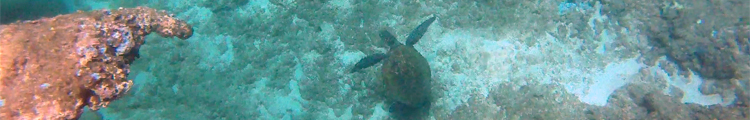Coral Hand Pointing at Green Sea Turtle at Three Tables