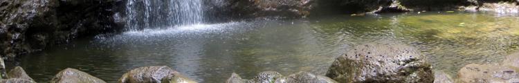 Manoa Falls Pond