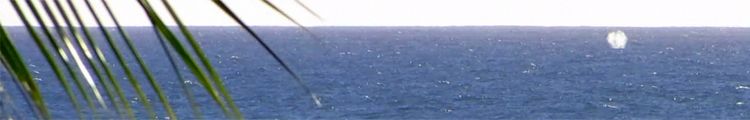 Whale Watching Hawaii: Humpback Whale Spouting Near Aulani Resort, Oahu