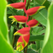 Scenic Hawaii Botanical Gardens