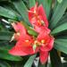 Scenic Hawaii: Koko Crater Botanical Garden