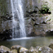 Hawaii Hiking Manoa Falls Trail