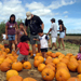 Hawaii Event Calendar Pumpkin Patch