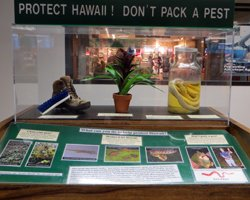 Honolulu Airport Invasive Species