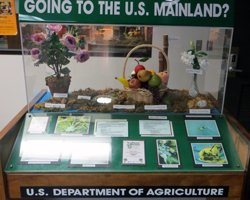 Honolulu Airport Agricultural Inspection Display