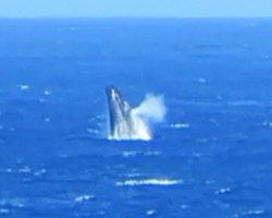 Whale Watching Hawaii: Humpback Whale Breaching & Spouting Near Kaena Point, Oahu