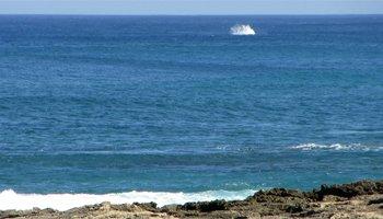 Whale Watching Hawaii: Near-Shore Splash from a Breaching Humpback Whale Near Kaena Point, Oahu