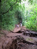 Manoa Falls Mud
