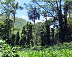 Manoa Falls Flora