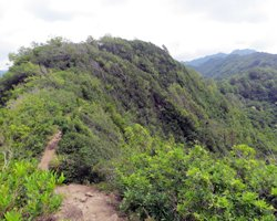 Waahila Ridge Trail to the Top of Mount Olympus Oahu