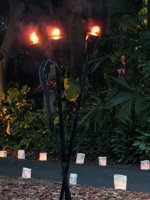 A Midsummer Night's Gleam at Foster Botanical Garden