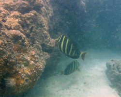 Fish in Murky Water at Hanauma Bay Hawaii
