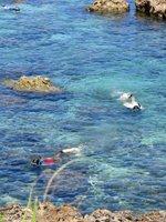 Snorkeling at North Shore Oahu
