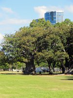 A Quiet Patch of Shade at Ala Moana Beach Park
