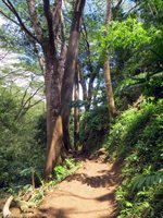 Hawaii Hiking Trail