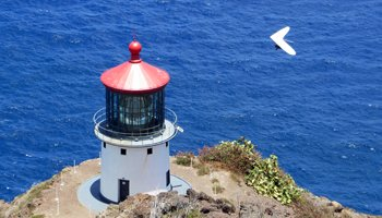 Hang Glider at Makapuu Lighthouse