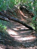 Fallen Tree Along Aiea Loop Trail