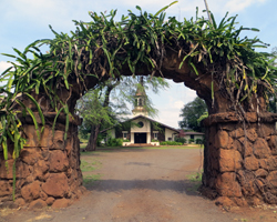 Night Blooming Cereus Covered Arch in Haleiwa Hawaii