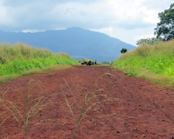 Red Dirt Road to Kukaniloko