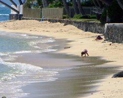 Windward Oahu Scenic Drive: A Girl Plays in the Sand on a Nameless East Shore Oahu Beach